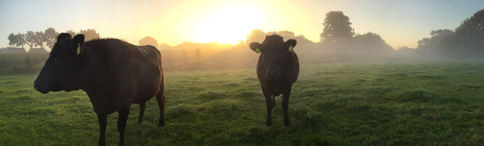 300 Jahre Erfahrung in der Rinderzucht
